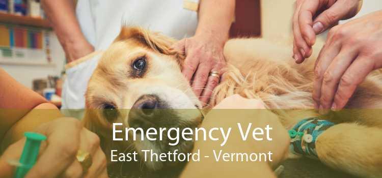 Emergency Vet East Thetford - Vermont