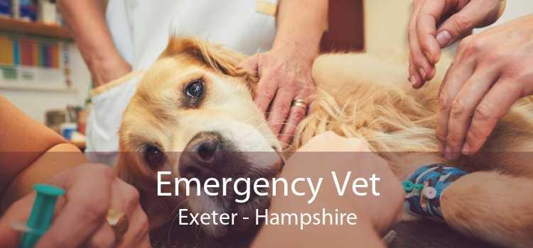 Emergency Vet Exeter - Hampshire