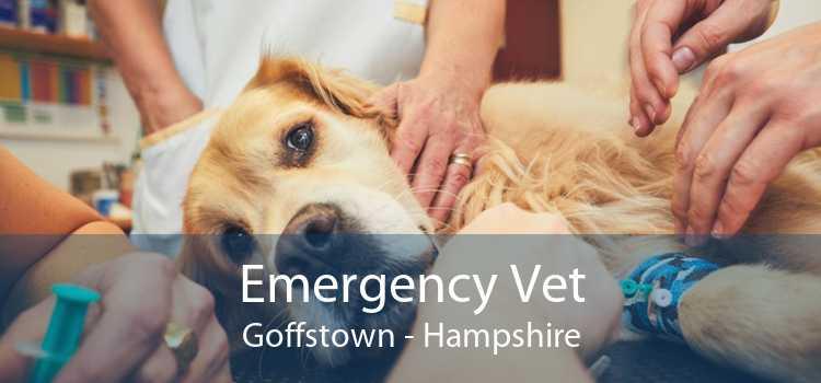 Emergency Vet Goffstown - Hampshire
