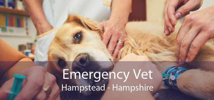 Emergency Vet Hampstead - Hampshire
