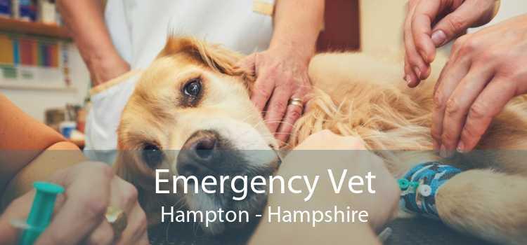 Emergency Vet Hampton - Hampshire