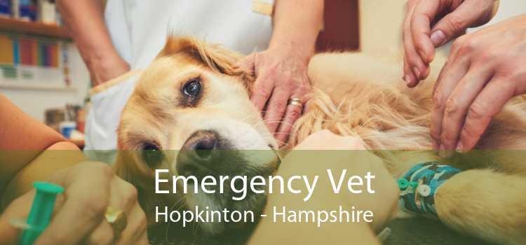 Emergency Vet Hopkinton - Hampshire