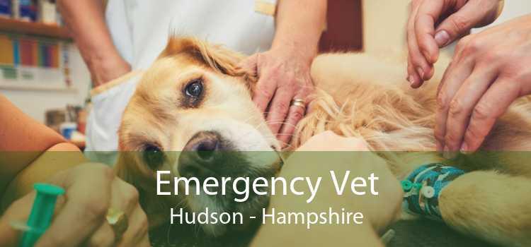 Emergency Vet Hudson - Hampshire