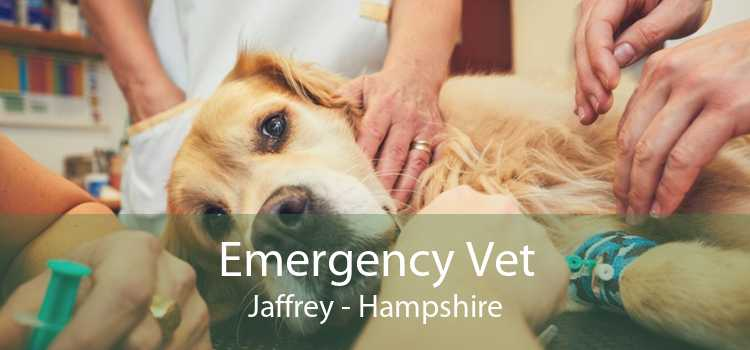 Emergency Vet Jaffrey - Hampshire