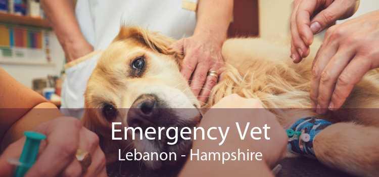 Emergency Vet Lebanon - Hampshire