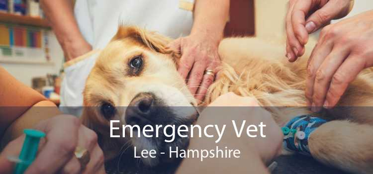 Emergency Vet Lee - Hampshire