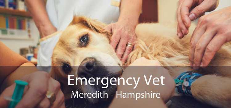 Emergency Vet Meredith - Hampshire