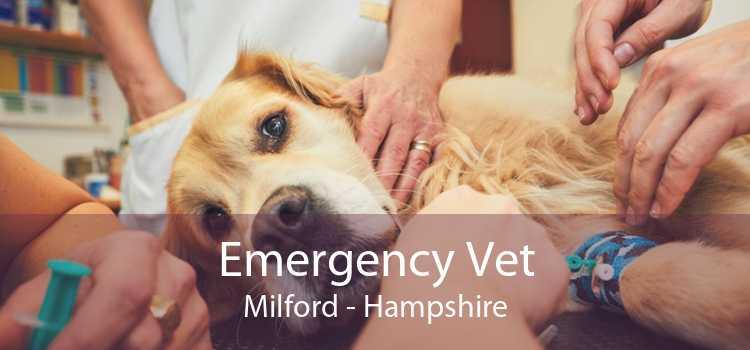 Emergency Vet Milford - Hampshire