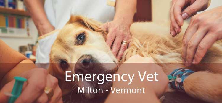 Emergency Vet Milton - Vermont