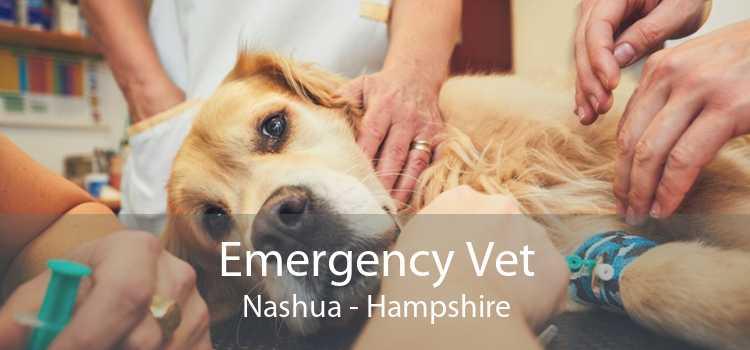 Emergency Vet Nashua - Hampshire