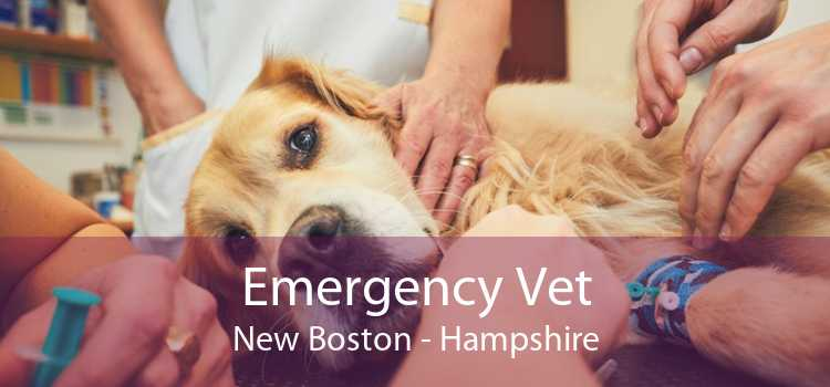 Emergency Vet New Boston - Hampshire