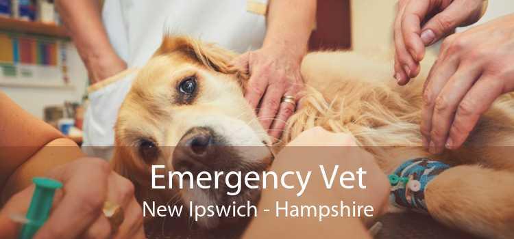 Emergency Vet New Ipswich - Hampshire