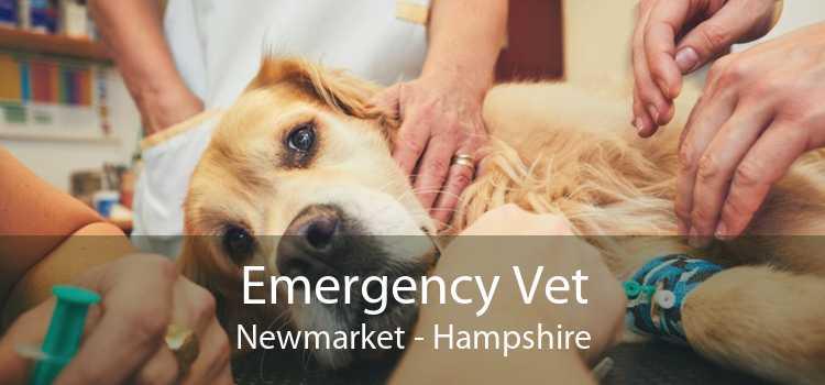 Emergency Vet Newmarket - Hampshire