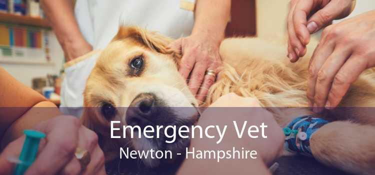 Emergency Vet Newton - Hampshire