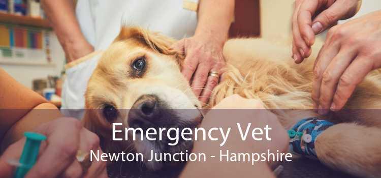 Emergency Vet Newton Junction - Hampshire