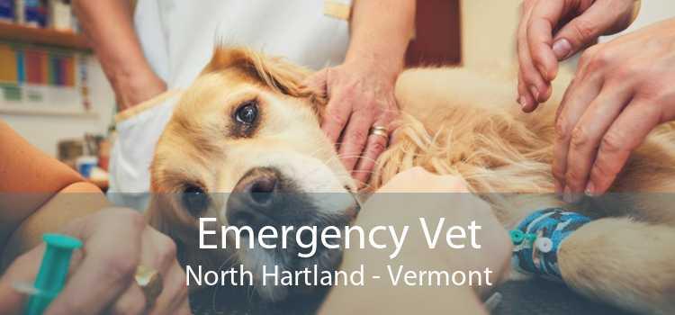 Emergency Vet North Hartland - Vermont