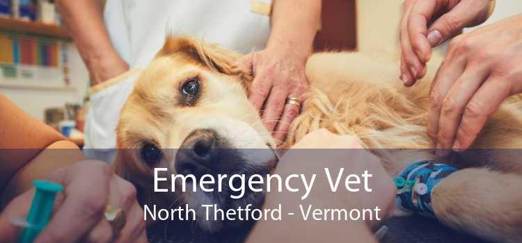 Emergency Vet North Thetford - Vermont