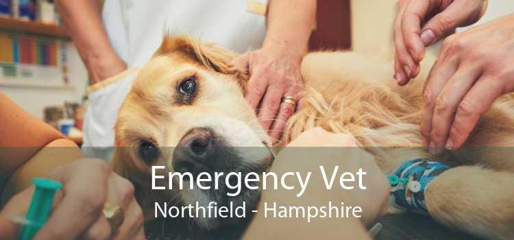 Emergency Vet Northfield - Hampshire