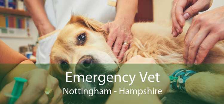 Emergency Vet Nottingham - Hampshire