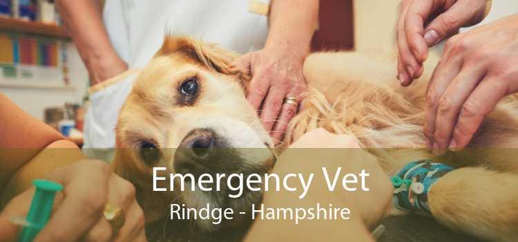 Emergency Vet Rindge - Hampshire
