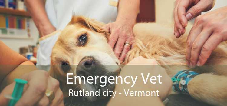 Emergency Vet Rutland city - Vermont