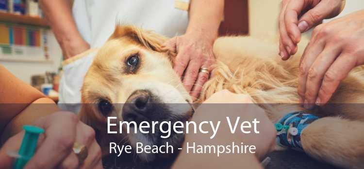 Emergency Vet Rye Beach - Hampshire