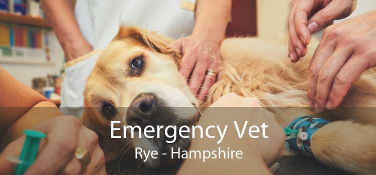 Emergency Vet Rye - Hampshire