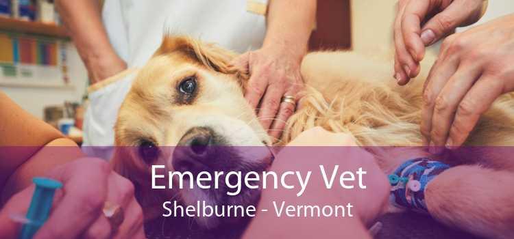 Emergency Vet Shelburne - Vermont