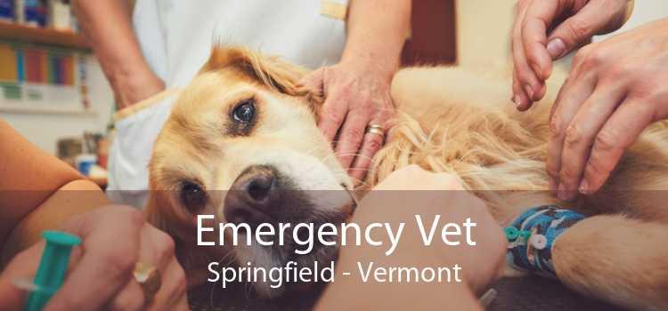 Emergency Vet Springfield - Vermont