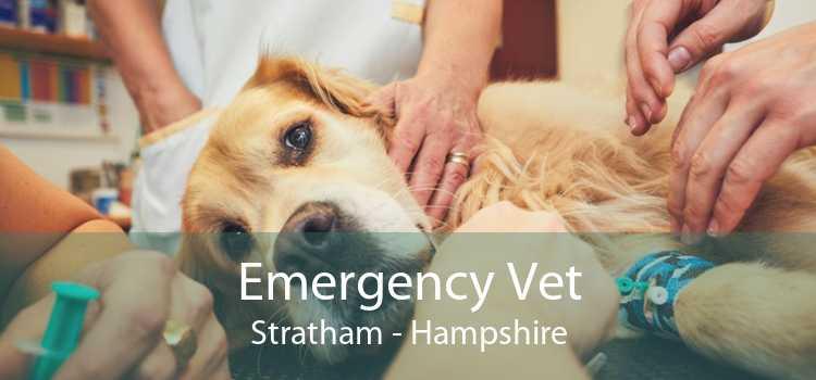 Emergency Vet Stratham - Hampshire