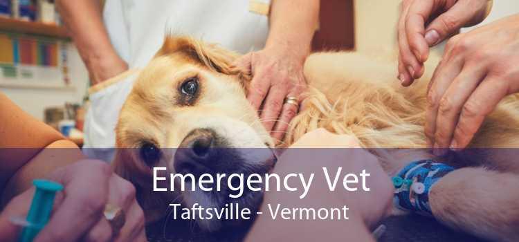 Emergency Vet Taftsville - Vermont