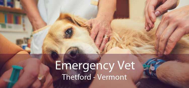Emergency Vet Thetford - Vermont