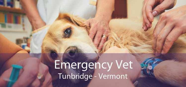 Emergency Vet Tunbridge - Vermont