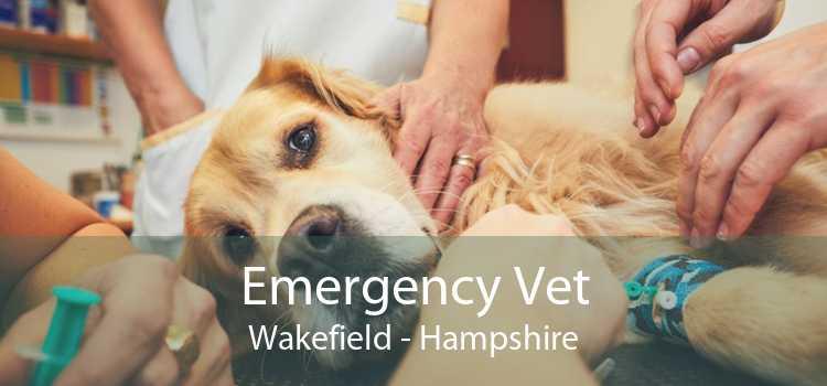 Emergency Vet Wakefield - Hampshire