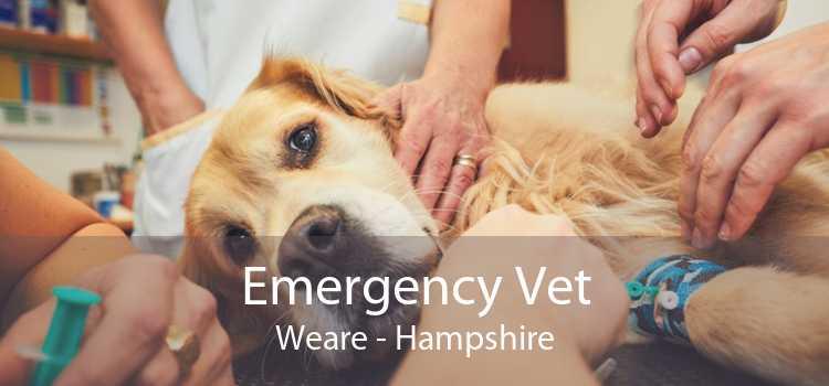 Emergency Vet Weare - Hampshire
