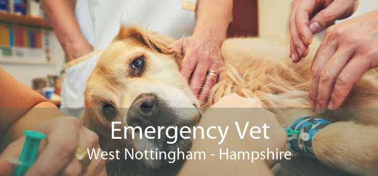 Emergency Vet West Nottingham - Hampshire