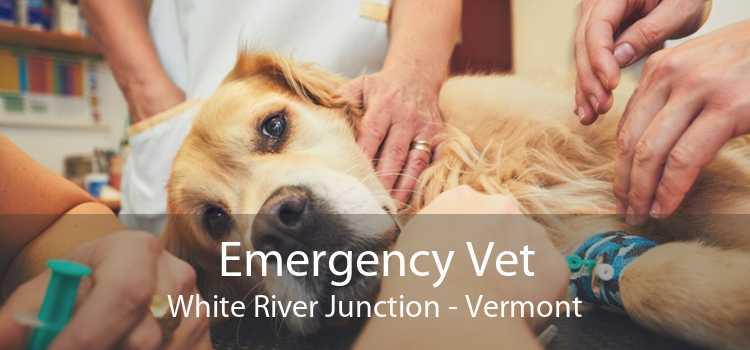 Emergency Vet White River Junction - Vermont