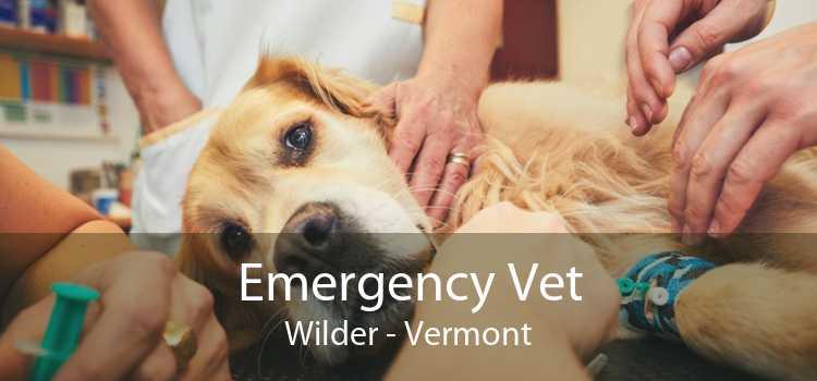 Emergency Vet Wilder - Vermont
