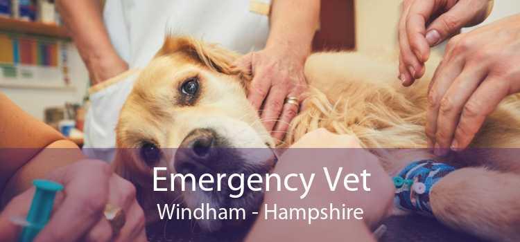 Emergency Vet Windham - Hampshire