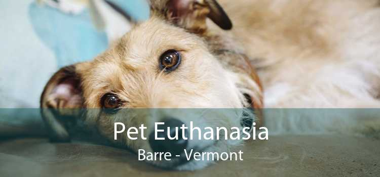 Pet Euthanasia Barre - Vermont