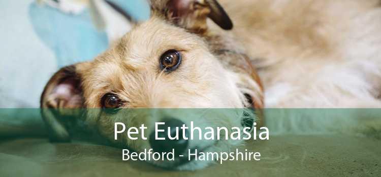 Pet Euthanasia Bedford - Hampshire