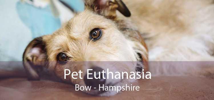 Pet Euthanasia Bow - Hampshire