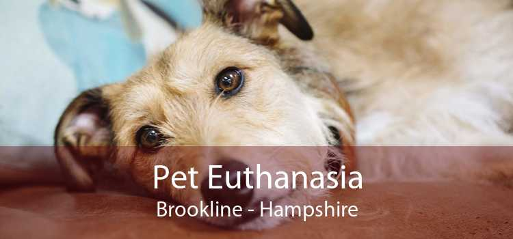 Pet Euthanasia Brookline - Hampshire