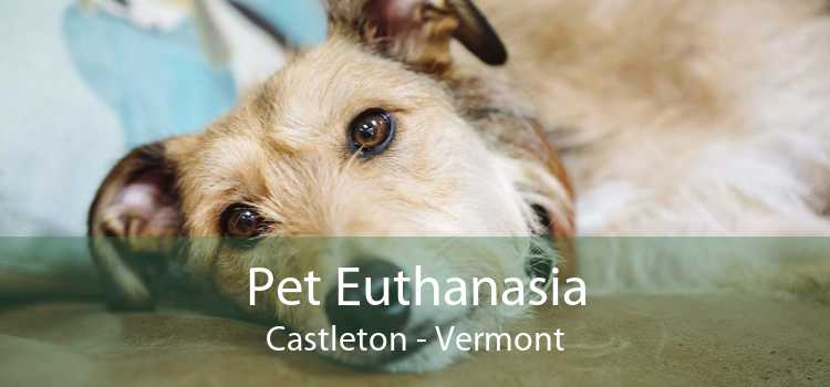 Pet Euthanasia Castleton - Vermont
