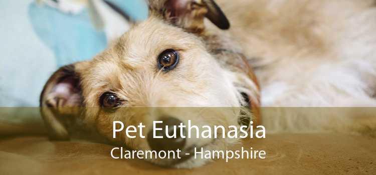 Pet Euthanasia Claremont - Hampshire