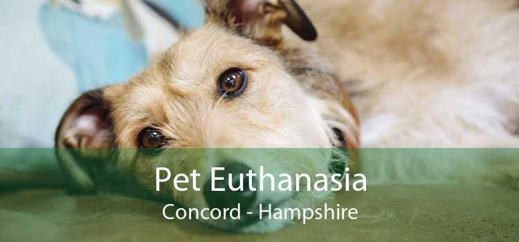 Pet Euthanasia Concord - Hampshire