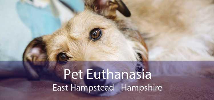 Pet Euthanasia East Hampstead - Hampshire