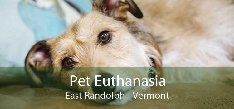 Pet Euthanasia East Randolph - Vermont
