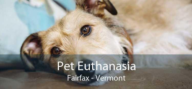 Pet Euthanasia Fairfax - Vermont