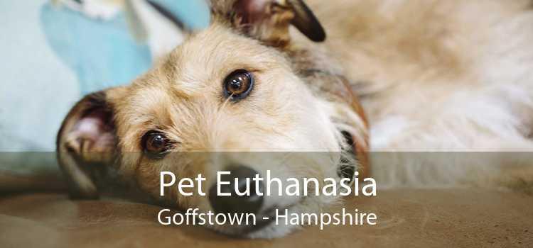 Pet Euthanasia Goffstown - Hampshire
